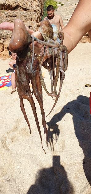 осьминог как приготовить