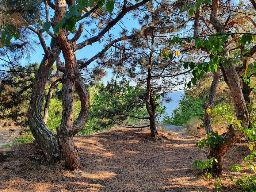 гора Пивиха фото
